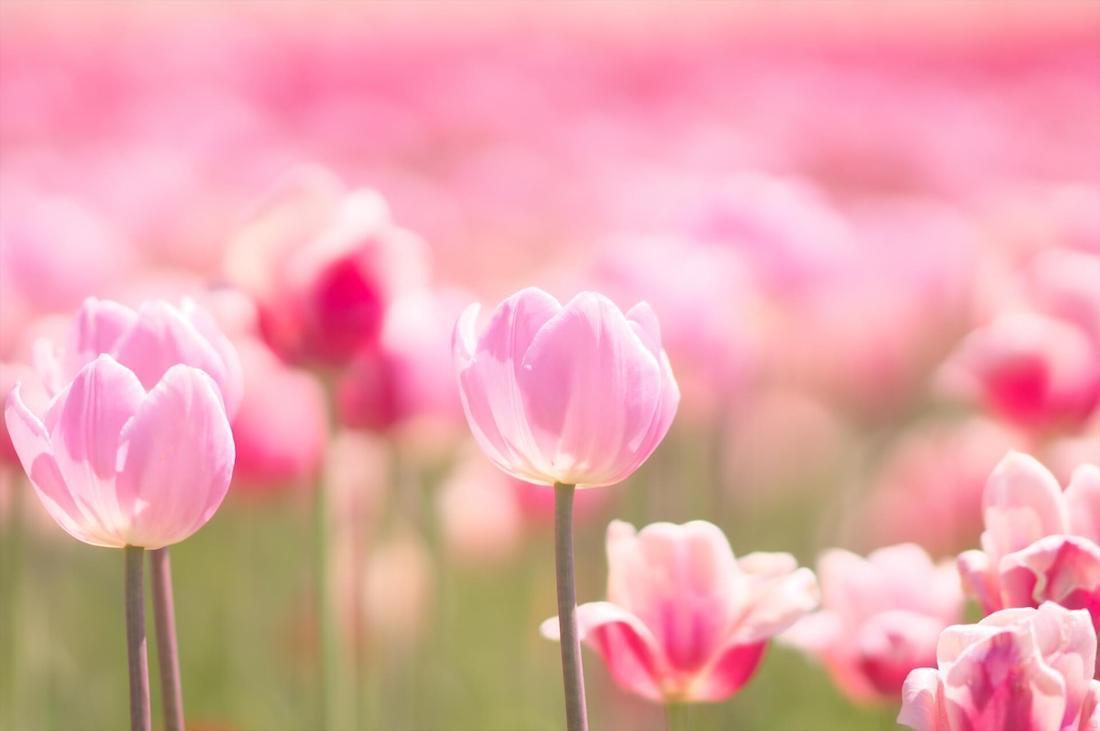 春分の日に運気アップ!